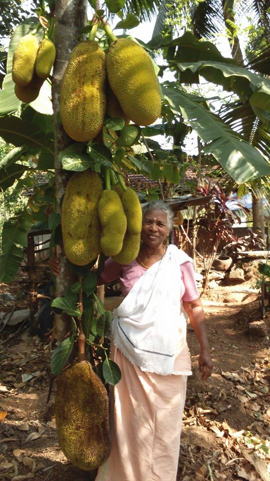 Saraswathi Ammal, mother of Jack Anil is an expert in making ethnic jack fruit dishes
