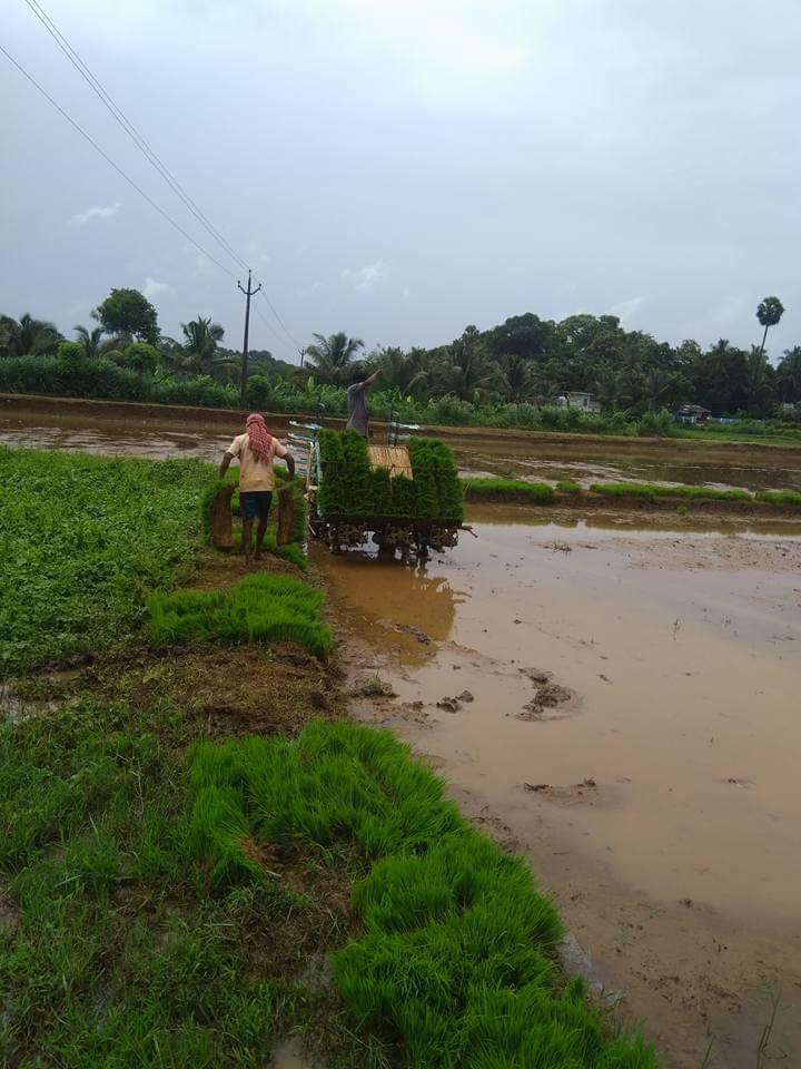 Swaroop is farming rare Kerala rice varieties organically